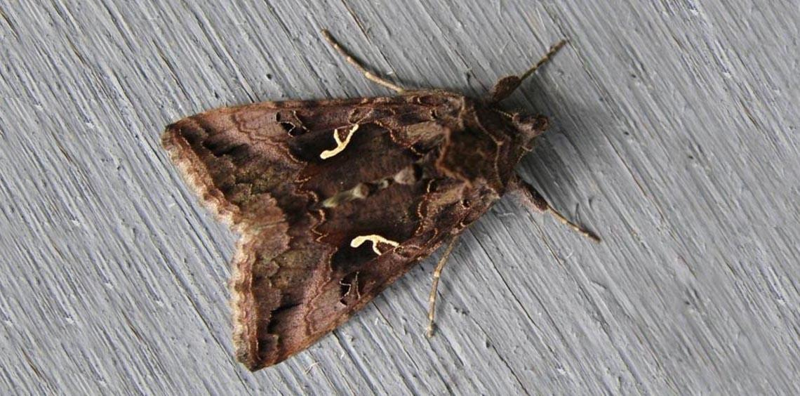 Moth night and/or morning