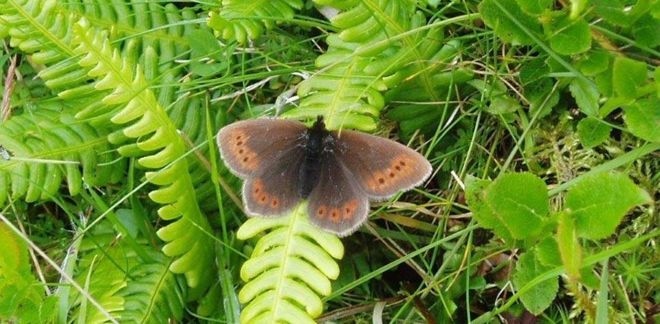 Butterflies and moths of the mountain
