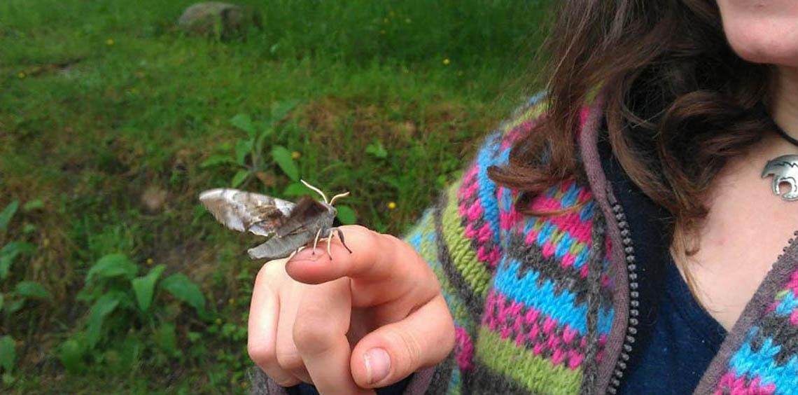 Crathes Children's Walk: Minibeasts and Marvellous Moths