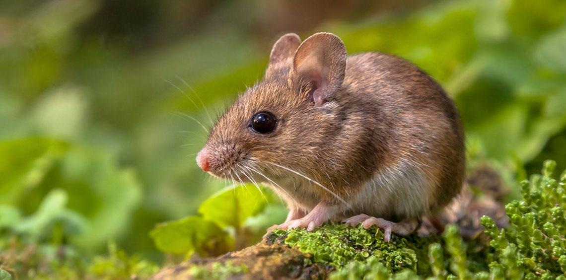 Crathes Children's Walk: Rodents: Small and Furry, Cute & Cuddly?