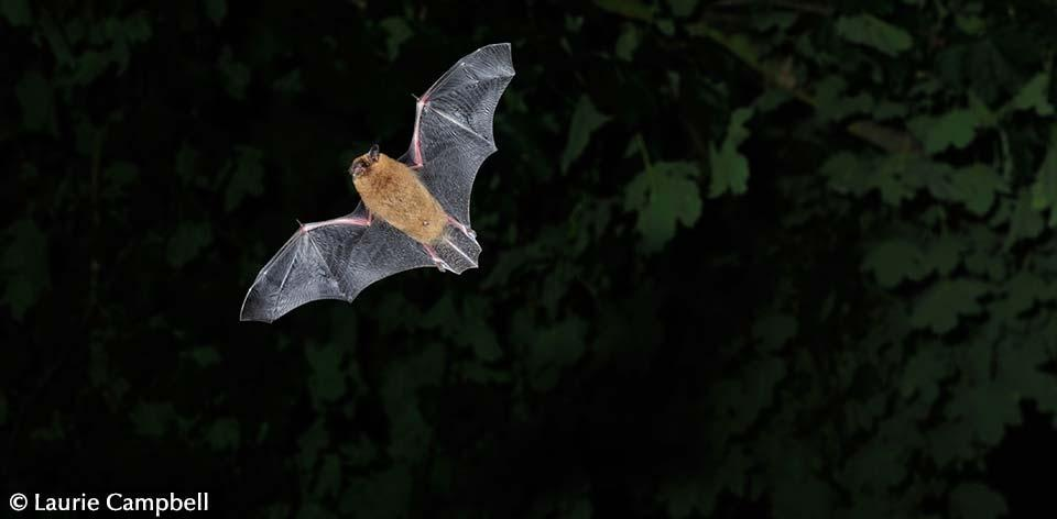 Bat Walk and Talk - Falkland Palace